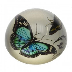 Sulfure papillon fond nacre , reference CL41000035